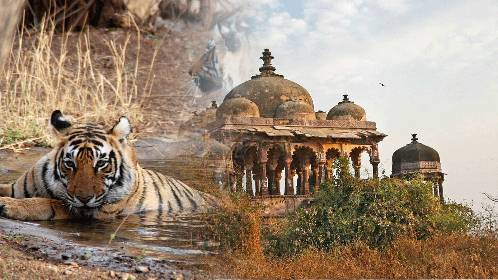 Ranthambore-National-Park-Tour-Package-Dallake-Holidays